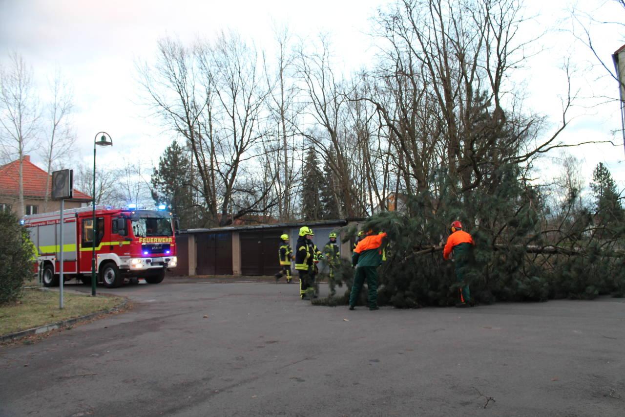 bäume auf gasleitung