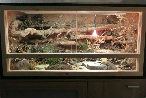 Paroedura picta Terrarium