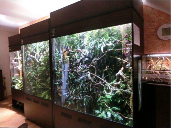 Regenwaldterrarien