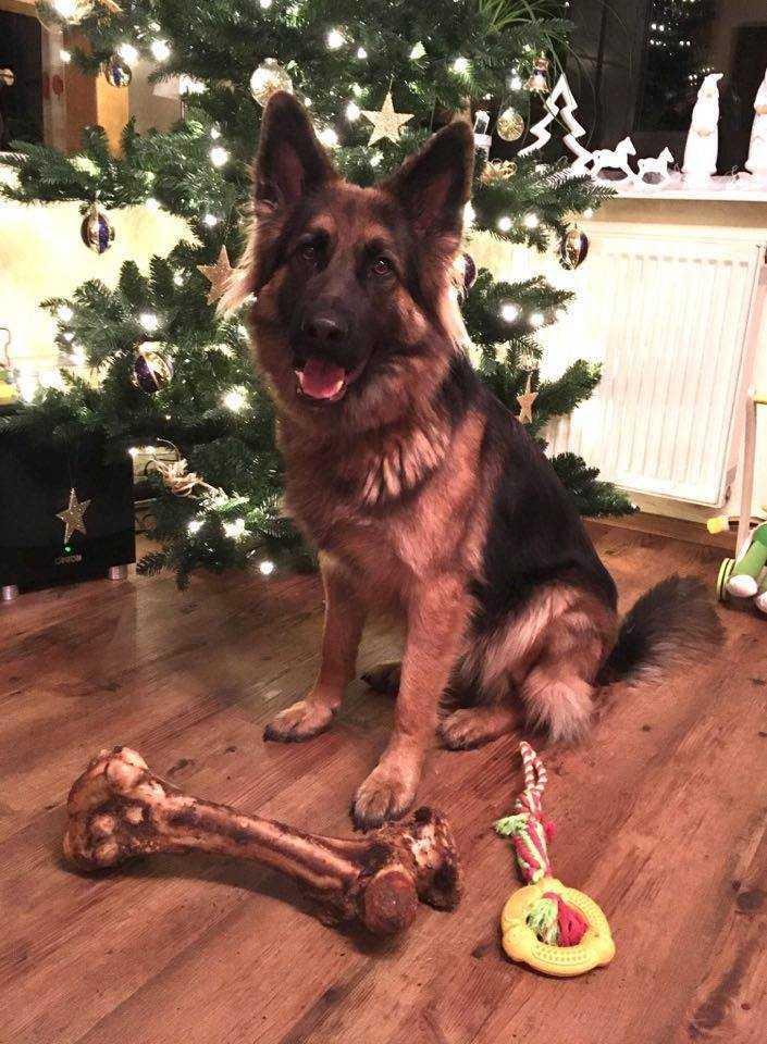 Weihnachten mit Askia