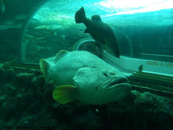 grosser Fisch