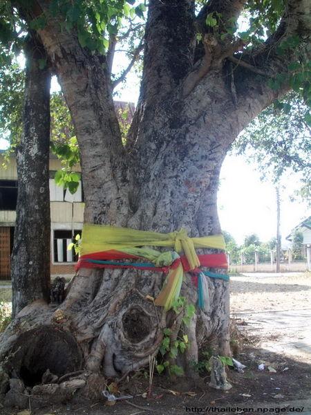 geschützter Baum