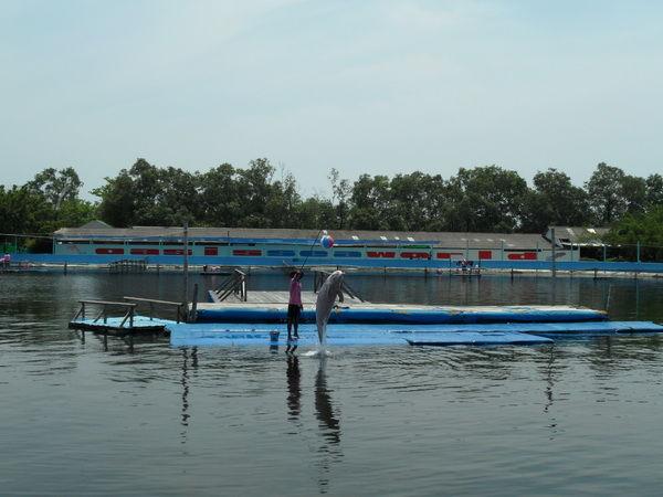 Delfintraining
