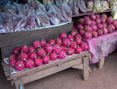 mangon reif