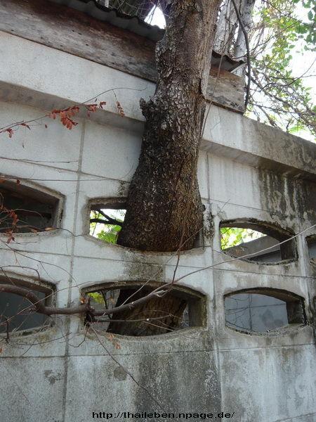Baum wächst aus steinmauer