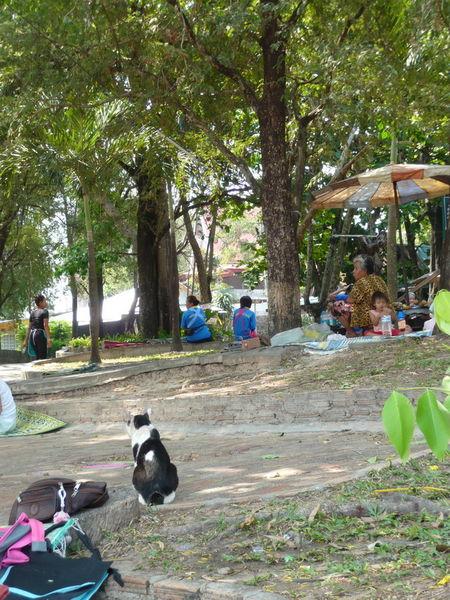 Sitzplatz unter Bäumen