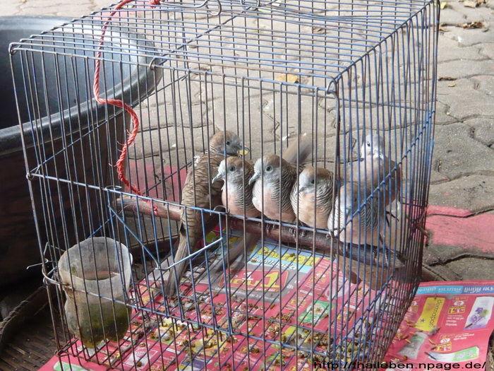 Vögel im Käfig