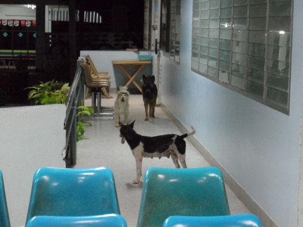 Hunde im Krankenhaus