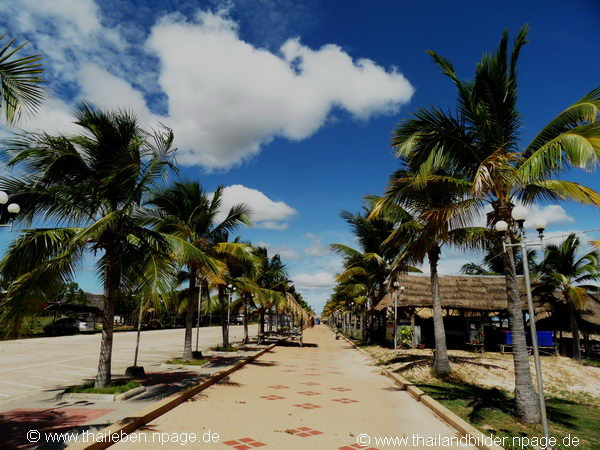 Palmenbild Pattaya Noi