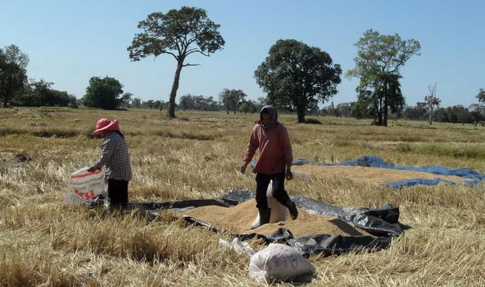 Reis abfüllen in säcke