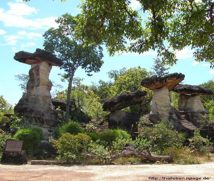 grosse Naturpilze aus Stein