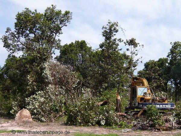 überreste meines Baumes