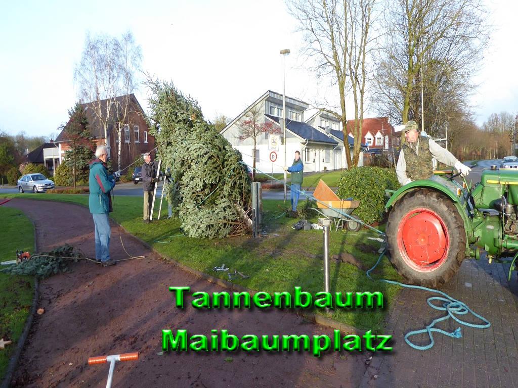 Tannenbaum-Maibaumplatz