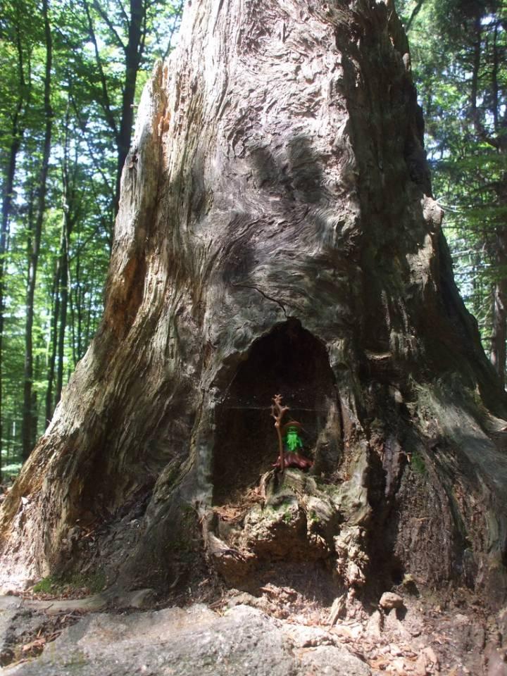 Foto alter Baum im Wald in einer Wurzelhoehle steht eine Playmobil(R) Männchen