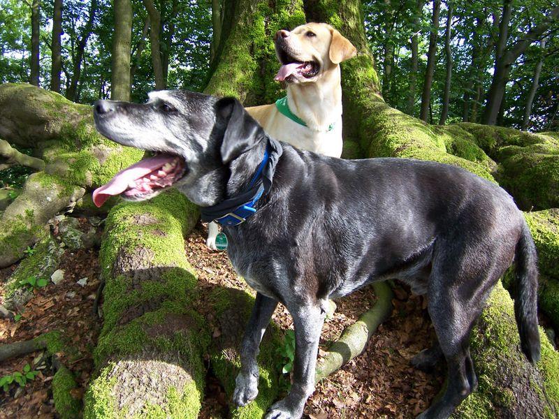 op vakantie met hond Duitsland