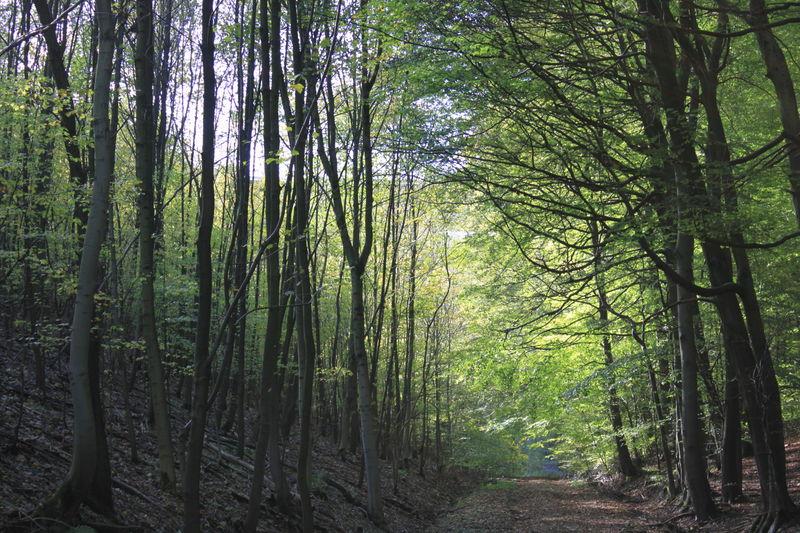 wandelen in Teutoburgerwald