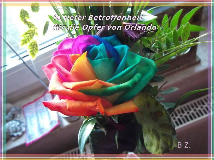 Regenbogenrose für Orlando