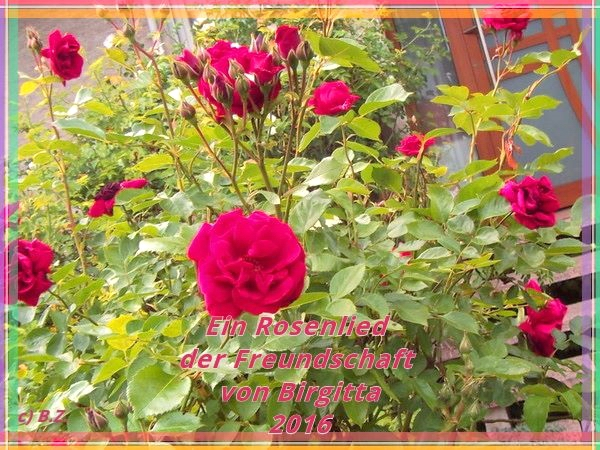 Rosenlied der Freundschaft