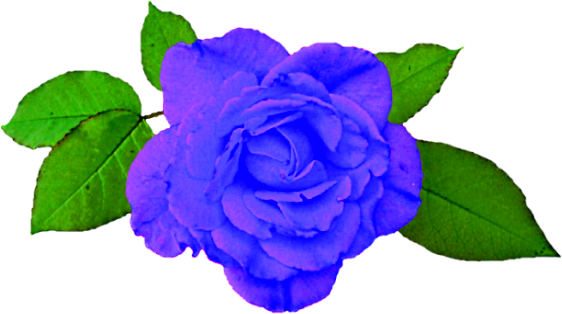 Blue Rose with Green Leaves