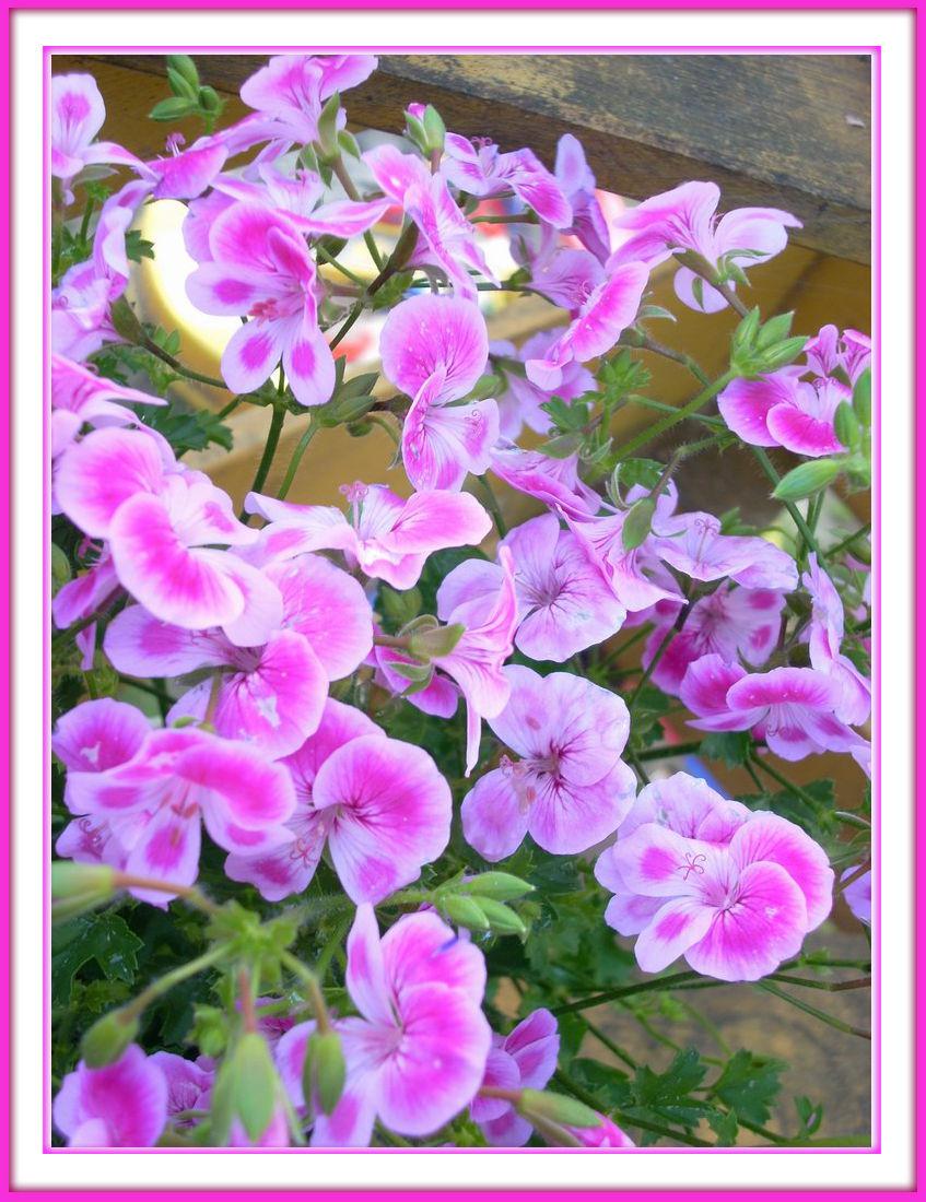 Blumen Schmetterlinge mit Rahmen