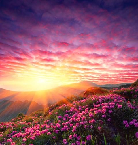 Das himmlische Licht lässt Liebe wachsen