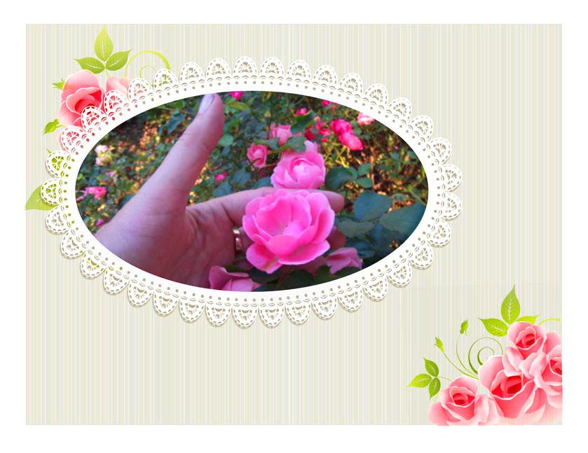 Ein Blick auf die Rose