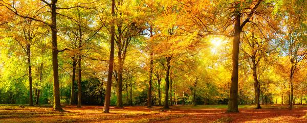 """Poster: """"Herbstliche Waldatmosphäre"""""""