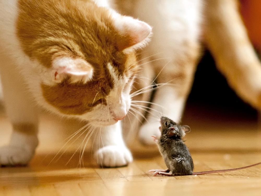 """""""Katz und Maus"""""""