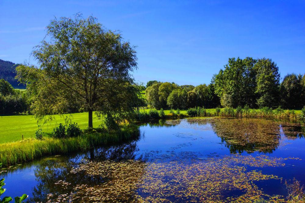 oase der ruhe see teich natur