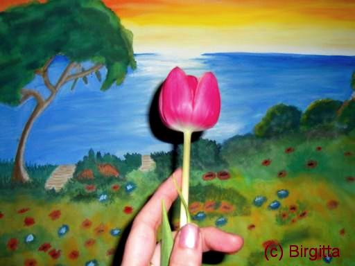 Pink Tulpe mit Meeresblick
