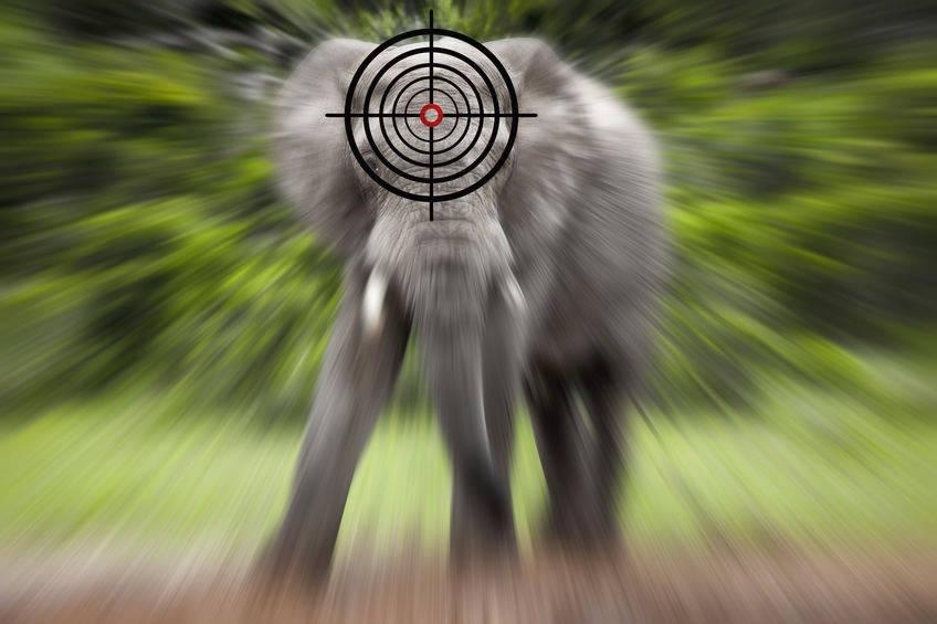 Elefant erschießen für das geliebte Elfenbein