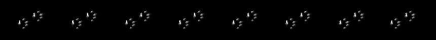 """Trennlinie: """"Pfoten-Spur"""" - Schwarz"""