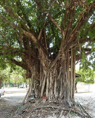 Baumbild lange gewachsen