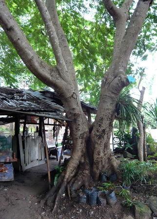 Baumbild gespalten und gewachsen