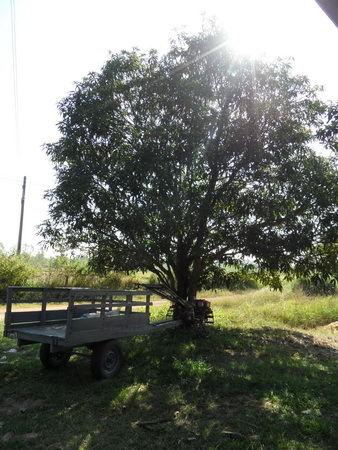 Baumbild anhänger im Schatten