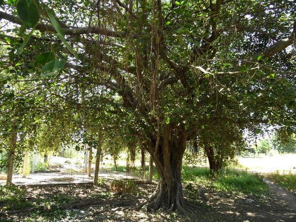 Baumbild kurzer Stamm