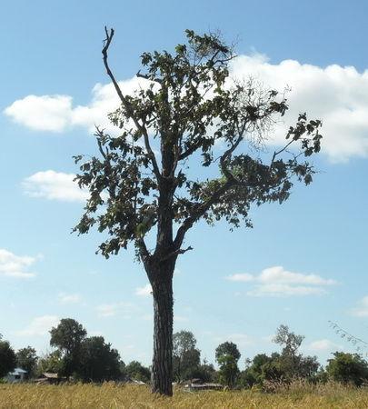 Baumbild der Kampf um das überleben