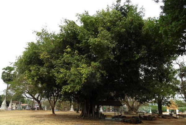 ein prachtvolles Baumbild