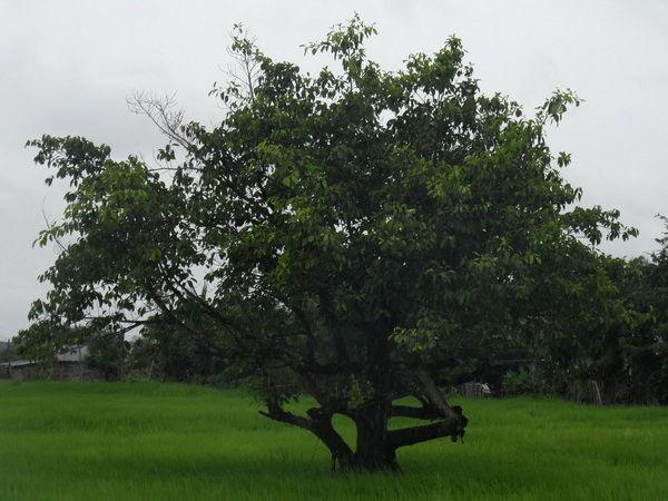 Baumbild vom Boden neu verzweigt