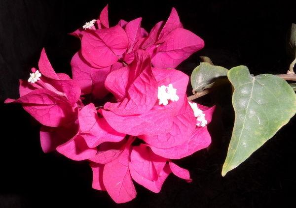 Blumen schönes Rot