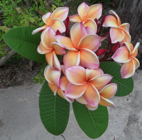 Blumen aufgehende blüten