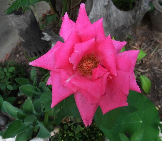Blumen weiss lila
