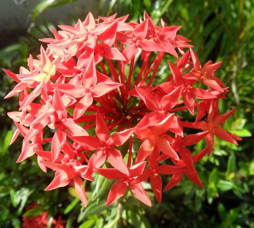 Blumen prachtsfarben
