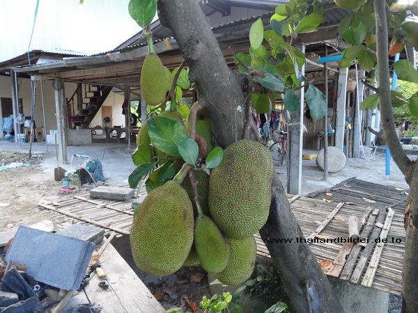 Früchte-bilder Jackfruit