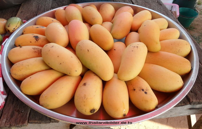 Mango reif