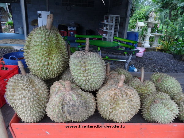 Durian die Stinkefrucht