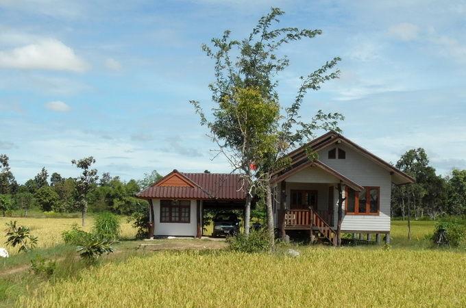 Bild Haus im Reisfeld