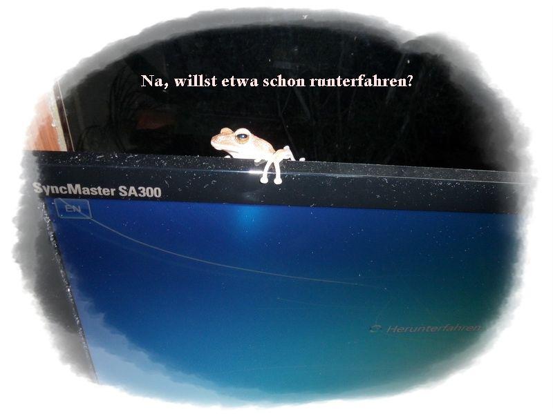 Frosch auf Bildschirm zu Besuch