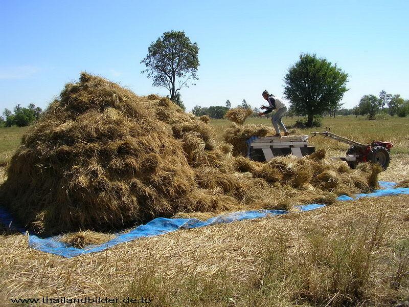 Reis deponiert