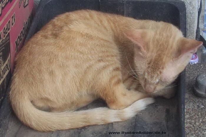 Katzenbild schlafen
